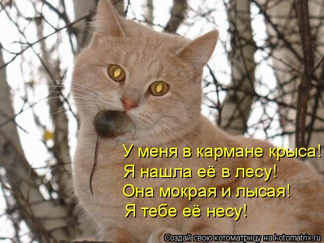 Котоматрица: У меня в кармане крыса! Я нашла её в лесу!  Она мокрая и лысая! Я тебе её несу!