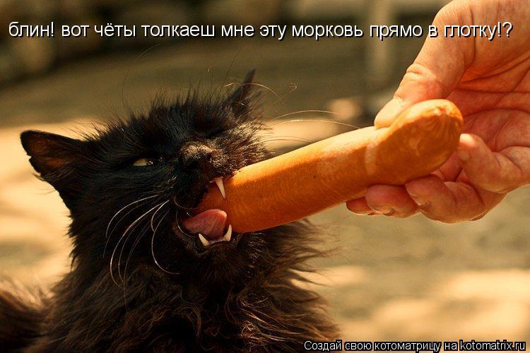 Котоматрица: блин! вот чёты толкаеш мне эту морковь прямо в глотку!?