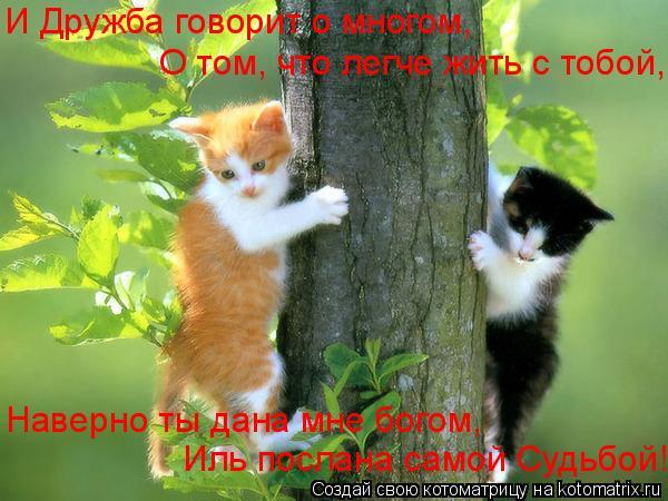 Котоматрица: И Дружба говорит о многом, О том, что легче жить с тобой, Иль послана самой Судьбой! Наверно ты дана мне богом,