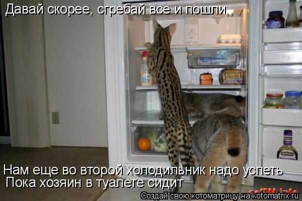 Котоматрица: Давай скорее, сгребай все и пошли,, Нам еще во второй холодильник надо успеть Пока хозяин в туалете сидит