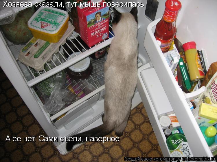 Котоматрица: Хозяева сказали, тут мышь повесилась.  А ее нет. Сами съели, наверное.