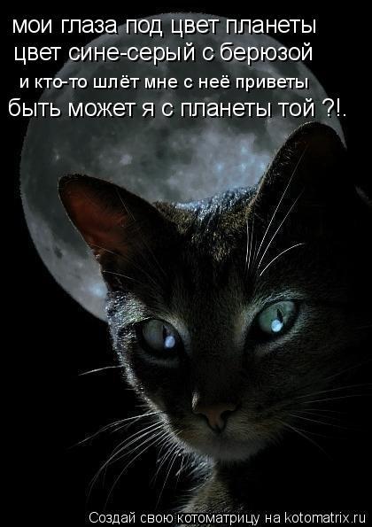 Котоматрица: мои глаза под цвет планеты цвет сине-серый с берюзой и кто-то шлёт мне с неё приветы быть может я с планеты той ?!.
