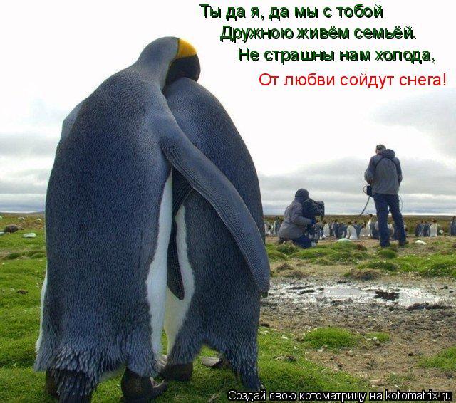 Котоматрица: Ты да я, да мы с тобой Дружною живём семьёй. Не страшны нам холода, От любви сойдут снега!