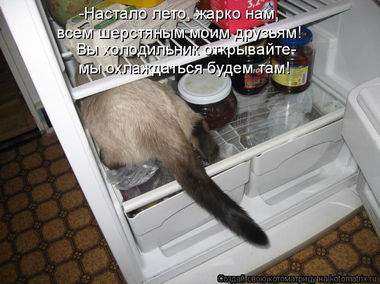 Котоматрица - -Настало лето, жарко нам, всем шерстяным моим друзьям! Вы холодильник