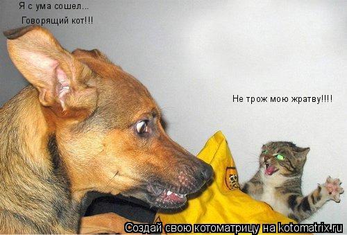 Котоматрица: Не трож мою жратву!!!! Я с ума сошел... Говорящий кот!!!