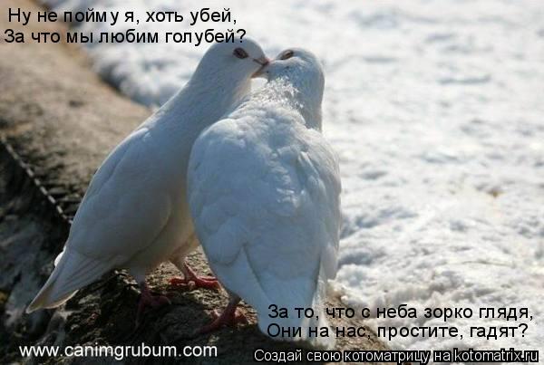 Котоматрица: Ну не пойму я, хоть убей, За что мы любим голубей? За то, что с неба зорко глядя, Они на нас, простите, гадят?