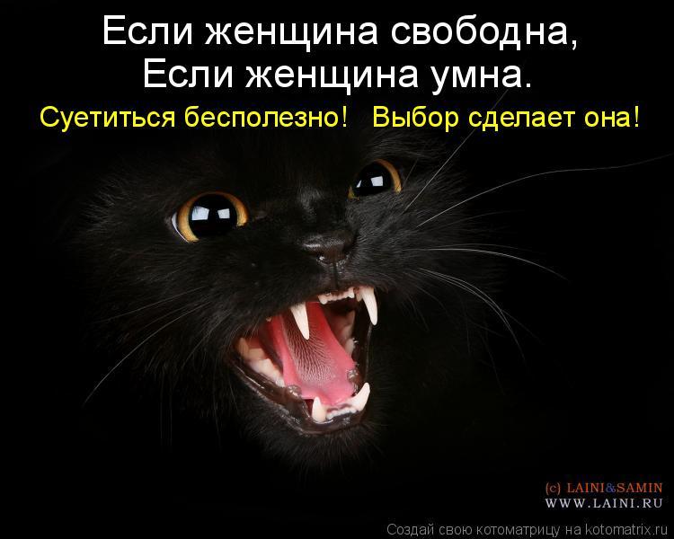 Котоматрица: Если женщина свободна,    Если женщина умна.     Суетиться бесполезно!   Выбор сделает она!