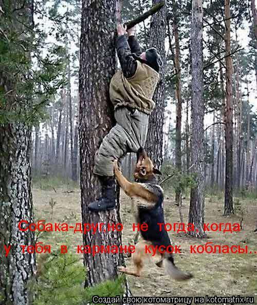 Котоматрица: Собака-друг,но  не  тогда, когда у  тебя  в  кармане  кусок  кобласы...(((
