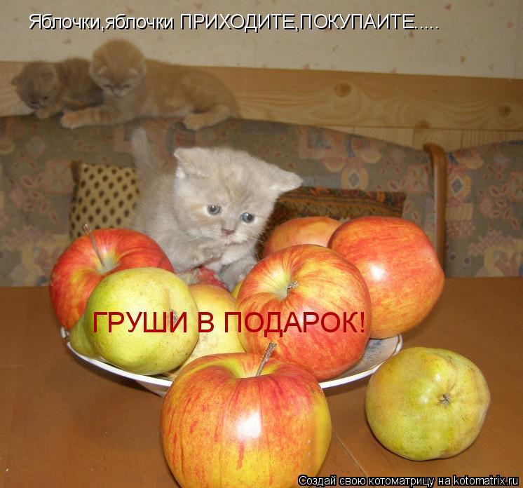 Котоматрица: Яблочки,яблочки ПРИХОДИТЕ,ПОКУПАИТЕ..... ГРУШИ В ПОДАРОК!