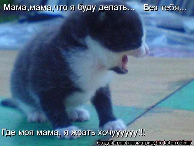 Котоматрица: Мама,мама,что я буду делать... Где моя мама, я жрать хочуууууу!!! Без тебя...