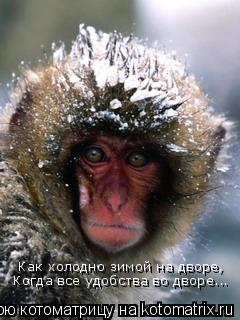 Котоматрица: Как холодно зимой на дворе, Когда все удобства во дворе...