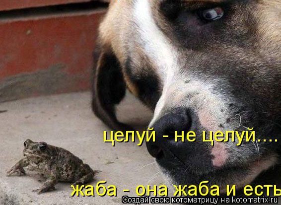 Котоматрица: целуй - не целуй.... жаба - она жаба и есть