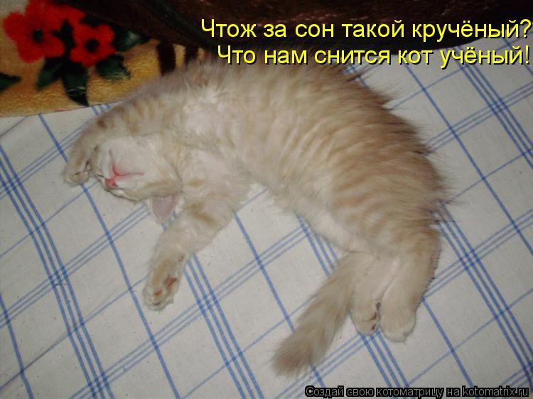 Котоматрица: Чтож за сон такой кручёный? Что нам снится кот учёный!