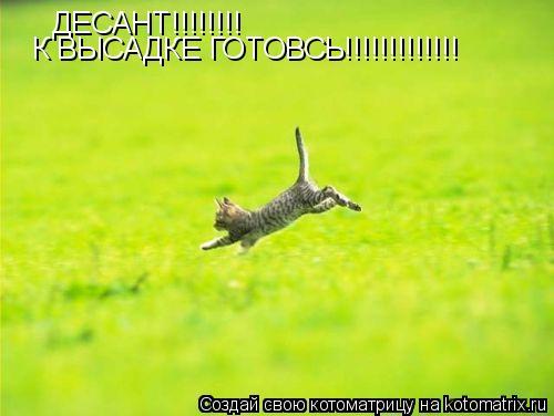 Котоматрица: ДЕСАНТ!!!!!!!! К ВЫСАДКЕ ГОТОВСЬ!!!!!!!!!!!!!