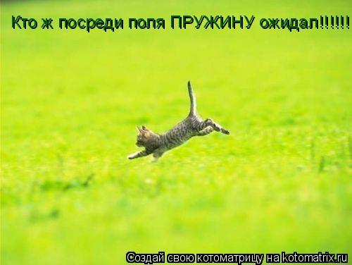 Котоматрица: Кто ж посреди поля ПРУЖИНУ ожидал!!!!!!