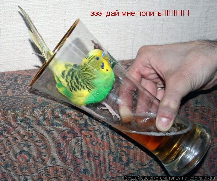 Котоматрица: эээ! дай мне попить!!!!!!!!!!!!
