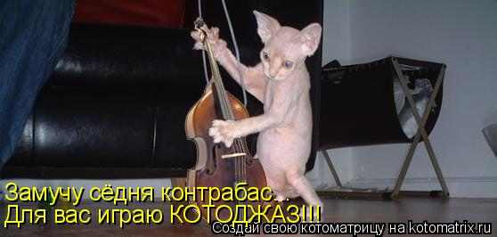 Котоматрица: Замучу сёдня контрабас... Для вас играю КОТОДЖАЗ!!!
