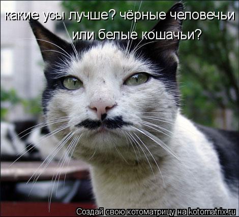 Котоматрица: какие усы лучше? чёрные человечьи или белые кошачьи?