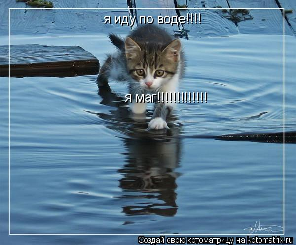 Котоматрица: я иду по воде!!!! я маг!!!!!!!!!!!!!
