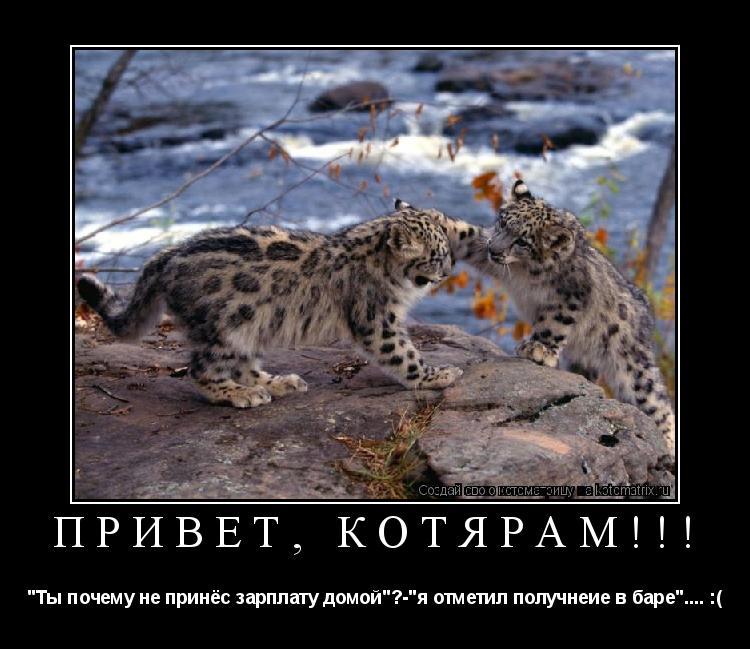 """Котоматрица: Привет, котярам!!! """"Ты почему не принёс зарплату домой""""?-""""я отметил получнеие в баре"""".... :("""