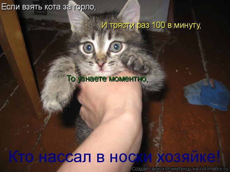 Котоматрица: Если взять кота за горло, И трясти раз 100 в минуту, То узнаете моментно, Кто нассал в носки хозяйке!