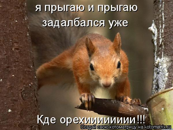 Котоматрица: я прыгаю и прыгаю  я прыгаю и прыгаю  задалбался уже Кде орехииииииии!!!
