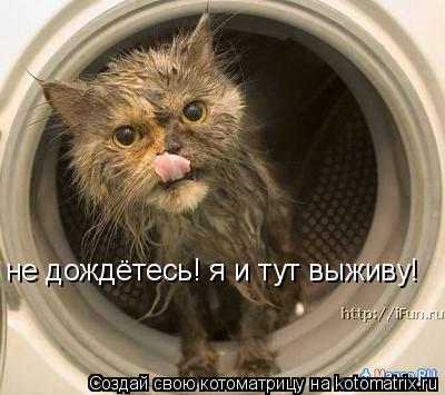 Котоматрица: не дождётесь! я и тут выживу!