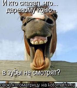 Котоматрица: И кто сказал, что... дареному коню... в зубы не смотрят?