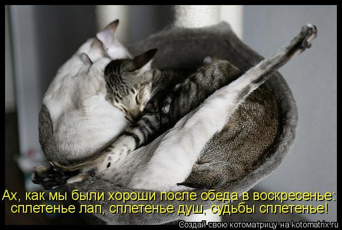 Котоматрица: Ах, как мы были хороши после обеда в воскресенье: сплетенье лап, сплетенье душ, судьбы сплетенье!