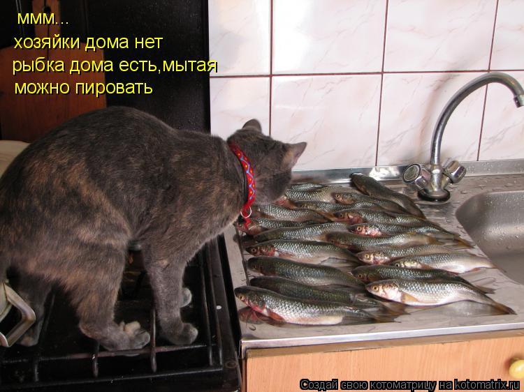 Котоматрица: ммм... хозяйки дома нет рыбка дома есть,мытая можно пировать