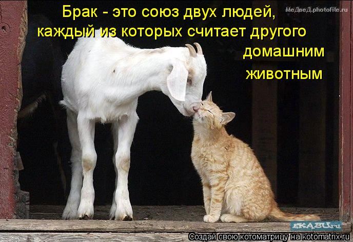 Котоматрица: Брак - это союз двух людей,  каждый из которых считает другого домашним  животным