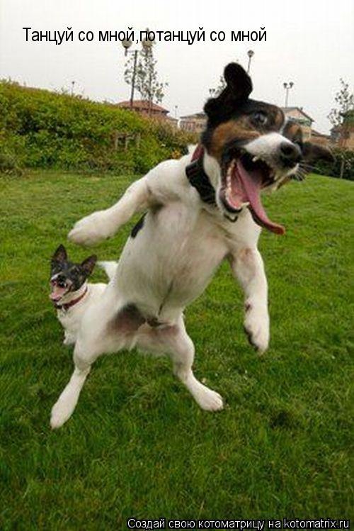 Котоматрица: Танцуй со мной,потанцуй со мной