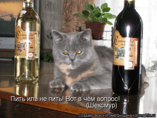 Котоматрица: Пить иль не пить! Вот в чём вопрос! (Шексмур)