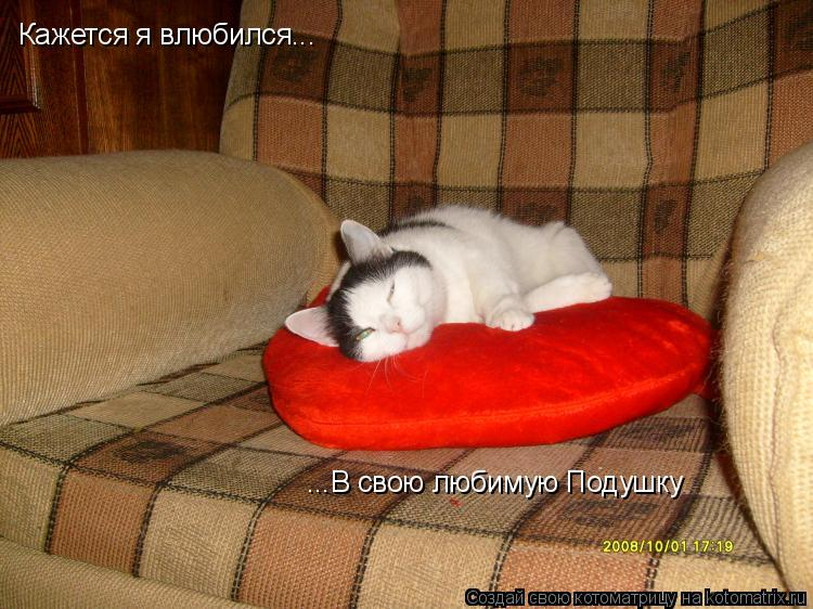 Котоматрица: Кажется я влюбился... ...В свою любимую Подушку