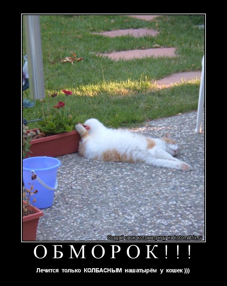 Котоматрица: Обморок!!! Лечится  только  КОЛБАСНЫМ  нашатырём  у  кошек )))