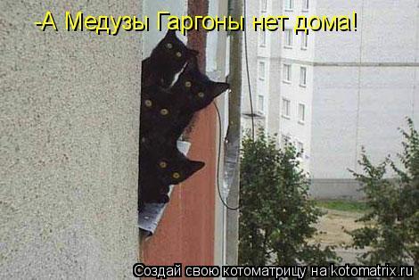Котоматрица: -А Медузы Гаргоны нет дома!