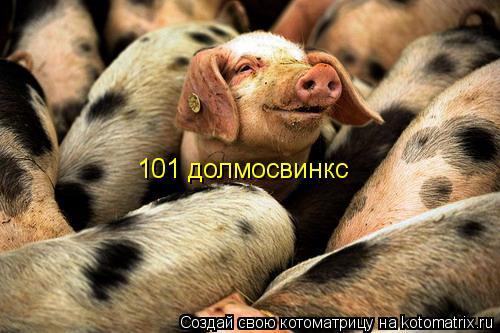 Котоматрица: 101 долмосвинкс