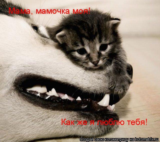 Котоматрица: Мама, мамочка моя! Как же я люблю тебя!