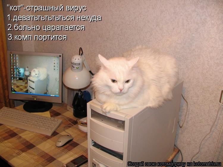 """Котоматрица: """"кот""""-страшный вирус   1.деватьтьтьтьться некуда 2.больно царапается 3.комп портится"""