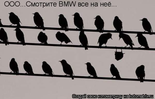 Котоматрица: ООО...Смотрите BMW все на неё...