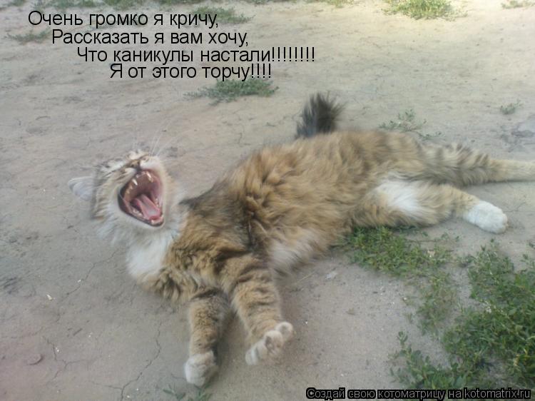 Котоматрица: Очень громко я кричу, Рассказать я вам хочу, Что каникулы настали!!!!!!!! Я от этого торчу!!!!