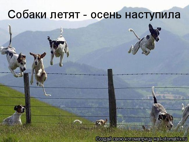 Котоматрица: Собаки летят - осень наступила