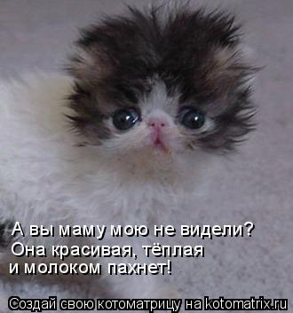 Котоматрица: А вы маму мою не видели?  Она красивая, тёплая и молоком пахнет!