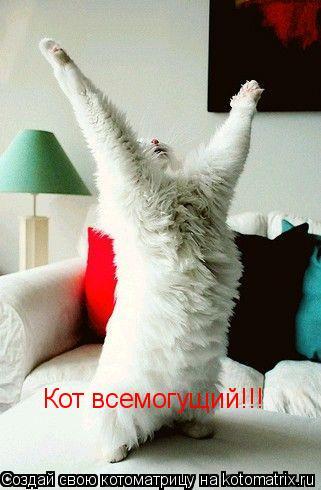 Котоматрица: Кот всемогущий!!!