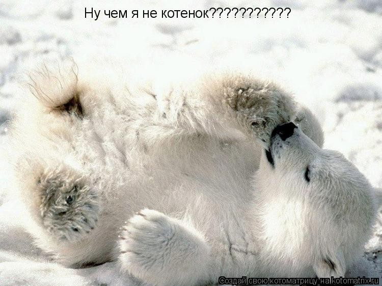 Котоматрица: Ну чем я не котенок???????????