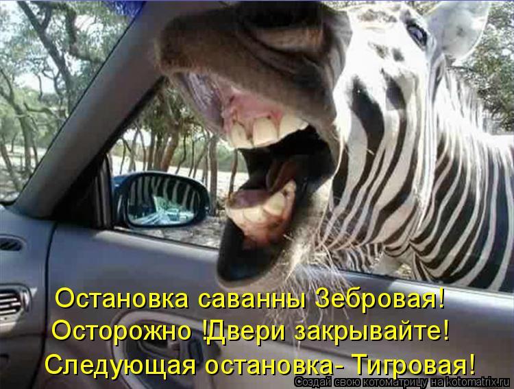 Котоматрица: Остановка саванны Зебровая! Осторожно !Двери закрывайте!  Следующая остановка- Тигровая!