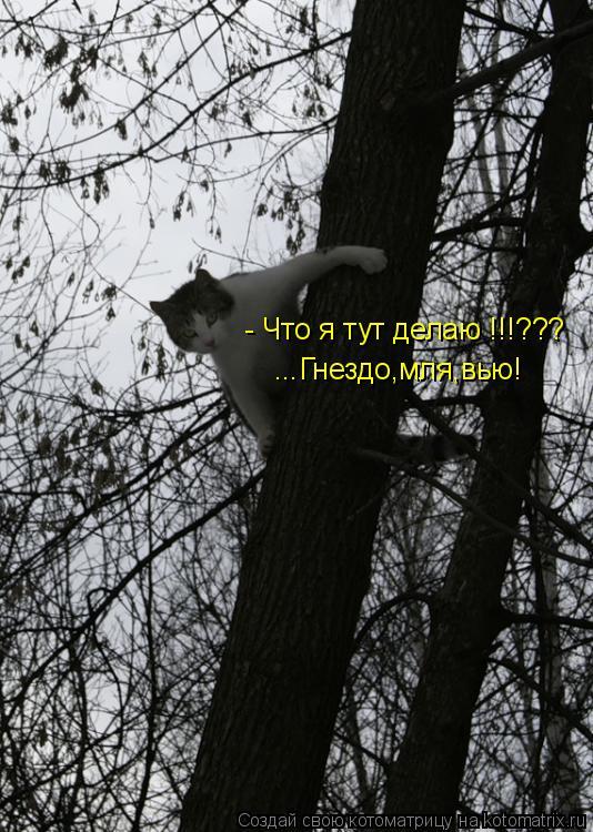 Котоматрица: - Что я тут делаю !!!??? ...Гнездо,мля,вью!