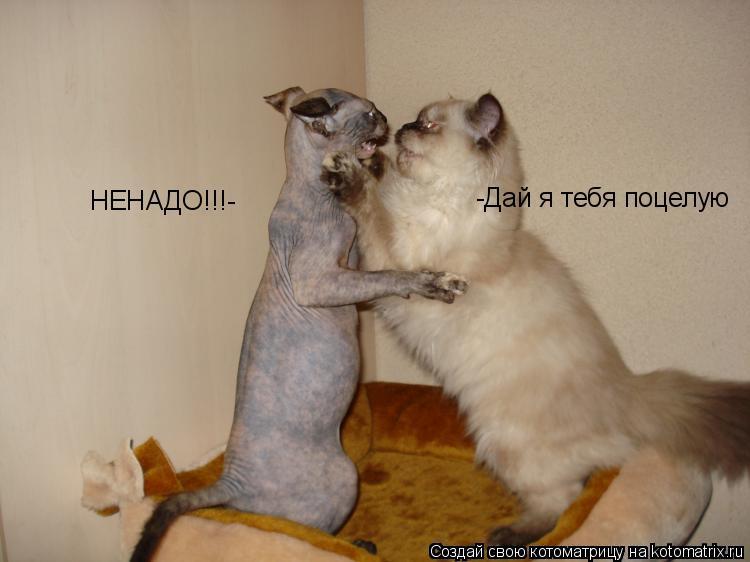 Котоматрица: -Дай я тебя поцелую НЕНАДО!!!-