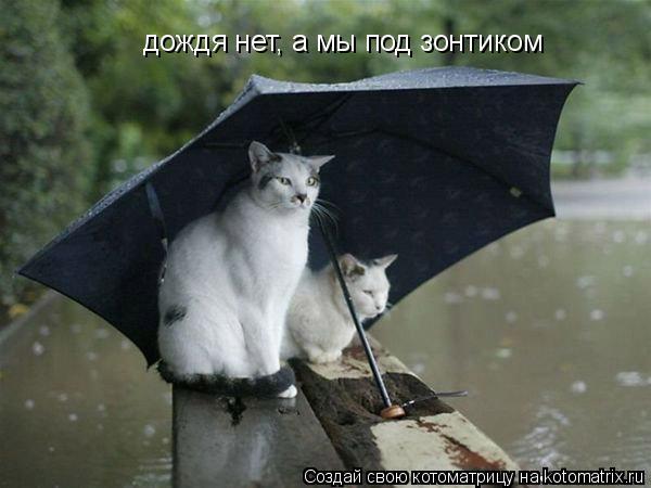 Котоматрица: дождя нет, а мы под зонтиком