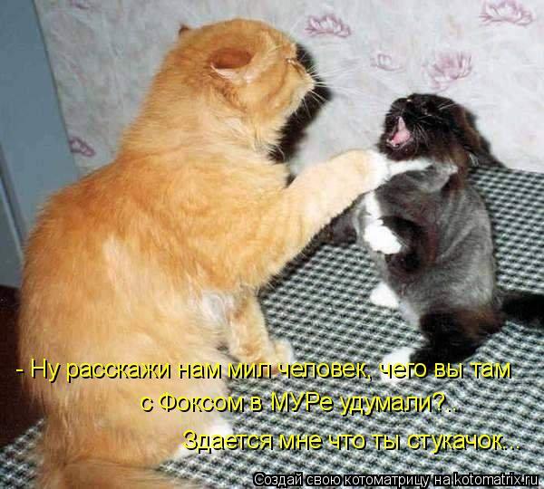 Котоматрица: - Ну расскажи нам мил человек, чего вы там с Фоксом в МУРе удумали?.. Здается мне что ты стукачок...